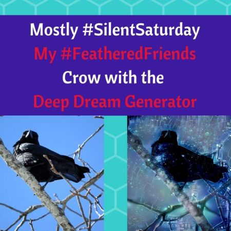 SilentSaturday FeatheredFriends Crow with the Deep Dream Generator blog thumbnail