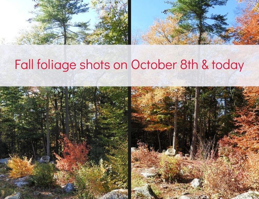 Fall foliage shots on October 8th and today blog thumbnail