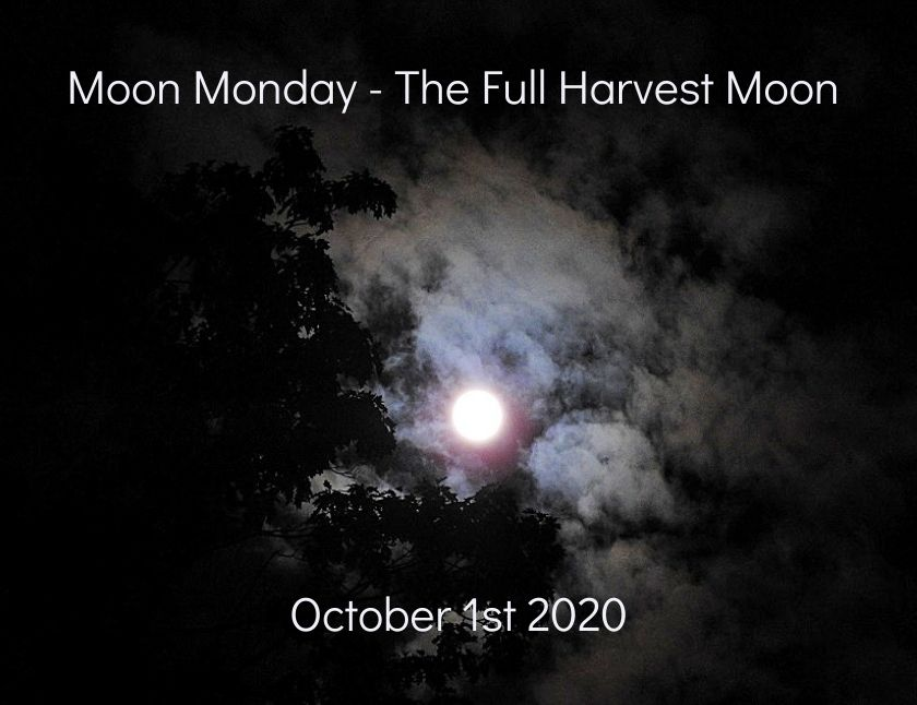 Moon Monday - ten more photos of the Full Harvest Moon October 1st 2020 blog thumbnail