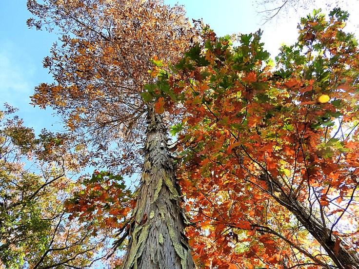 2. Five Fall Foliage Photos