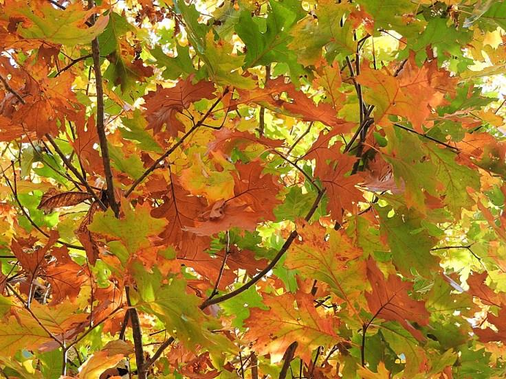 3. Five Fall Foliage Photos