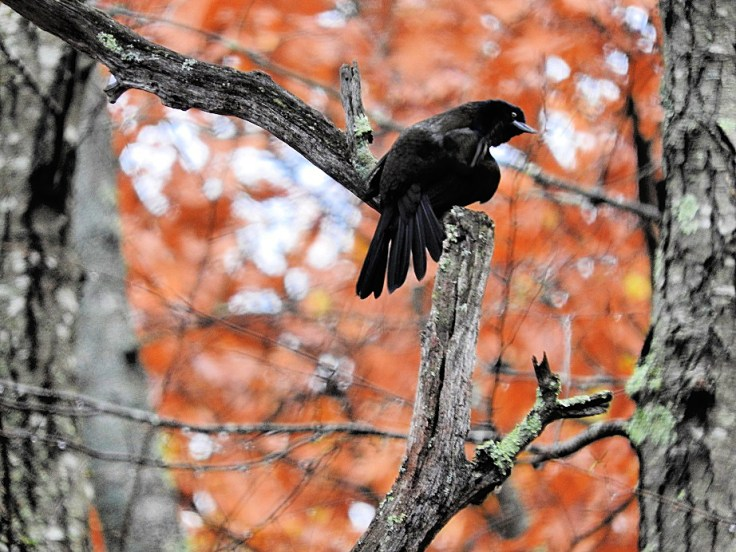 Flashback Friday Five Feathered Friends in Fall 2016