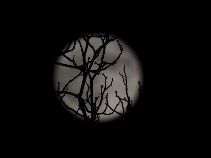Moon Monday - third set of the Halloween Blue Hunter's Full Moon
