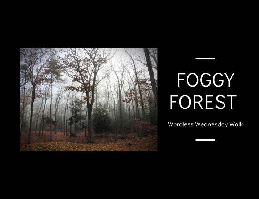 Foggy Forest Wordless Wednesday Walk blog thumbnail
