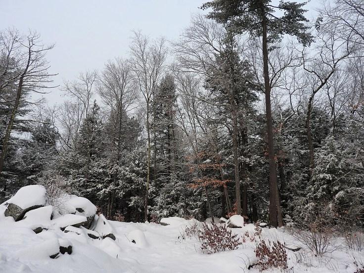 Snowy Solstice Trees