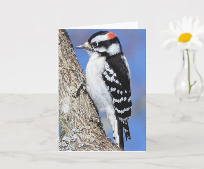 Zazzle greeting cards featuring my feathered friends for my mother