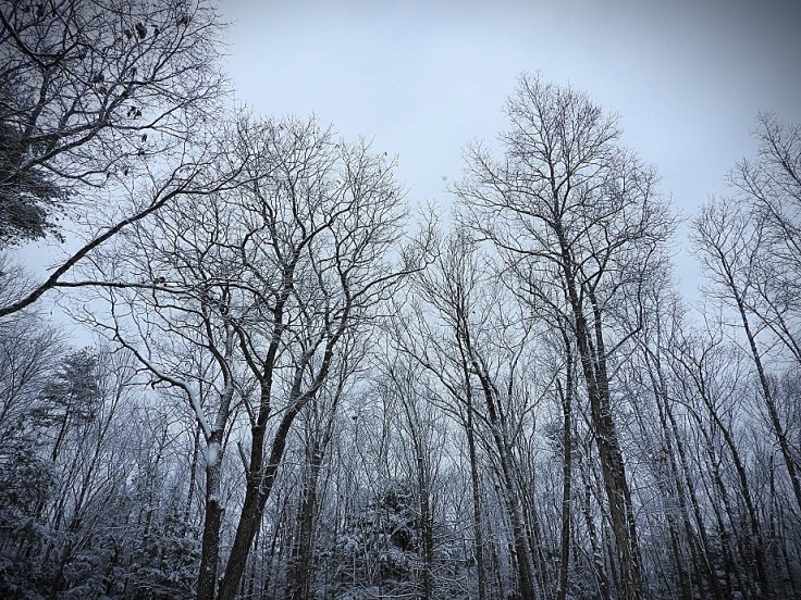 Trees During Snowy Weather