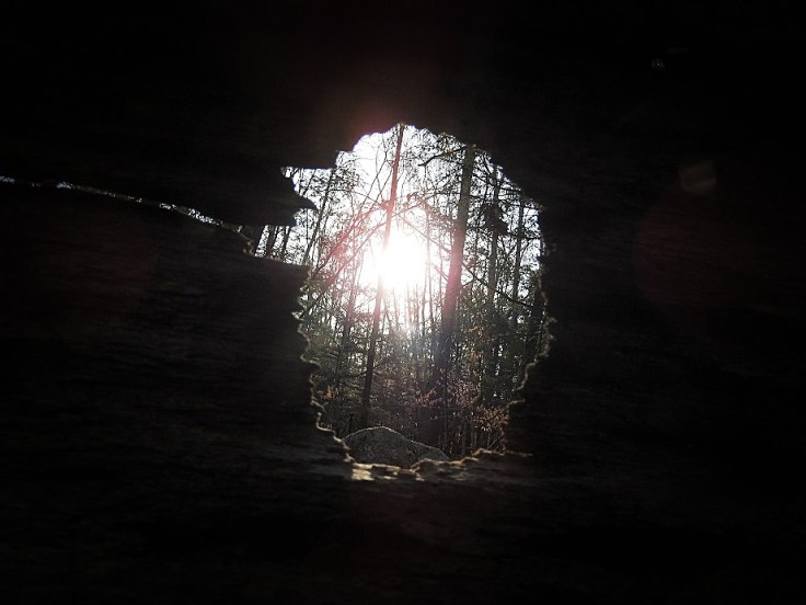 More photos from my walk in the woods