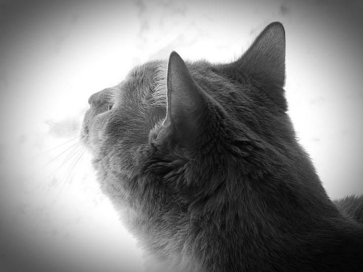 Four Freddie Fotos For Caturday