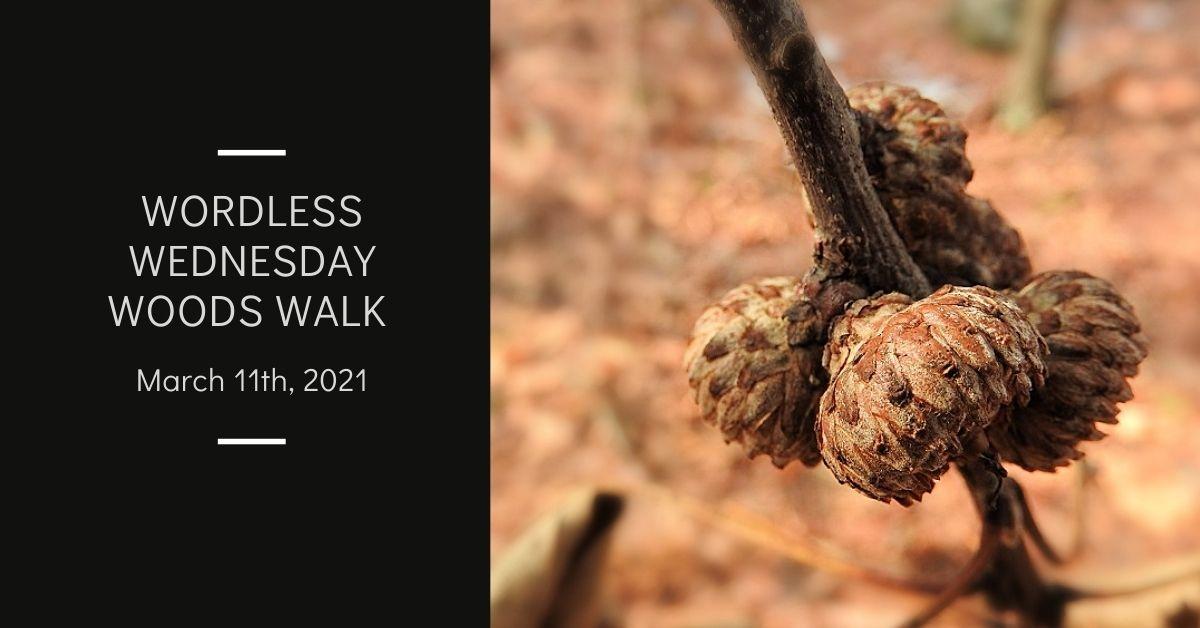 Wordless Wednesday Woods Walk Whatchamacallits blog thumbnail