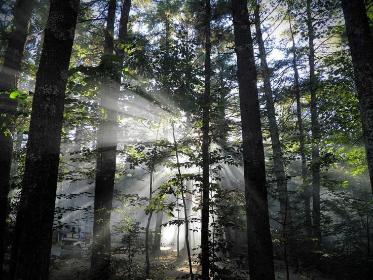 Misty morning woods