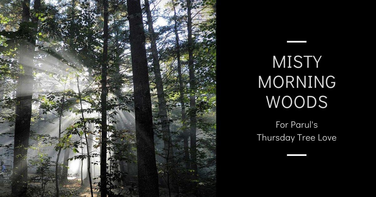 Misty morning woods blog thumbnail