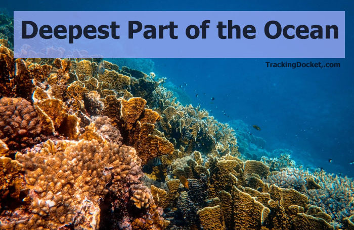 The arctic, atlantic, indian, pacific and southern. List Of 10 Deepest Part Of The Ocean