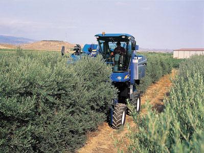 Maquinaria para olivar. Fuente: NewHolland