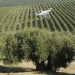 Drones en olivar, para qué se usan. Aplicaciones para mejorar el cultivo