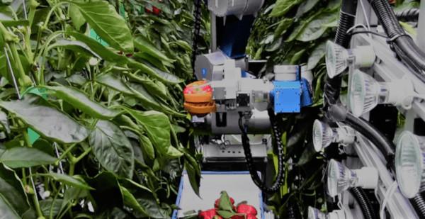Robots en invernadero. Robot recolector de pimientos de la Universidad de Wageningen, Holanda.