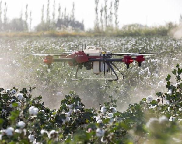 Drone pulverizador en parcela de algodón