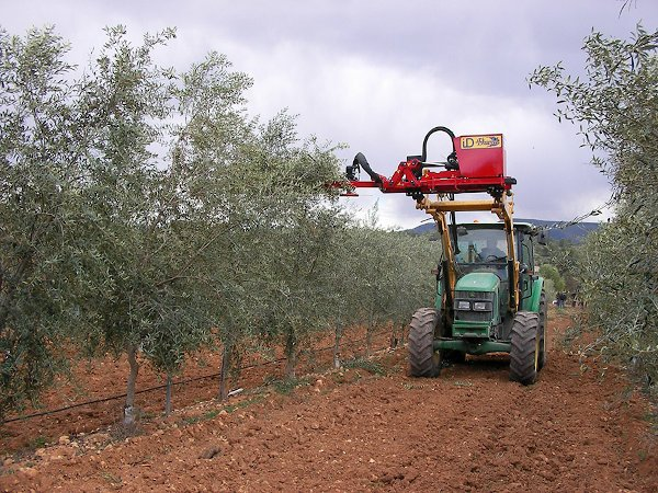 Podadora de olivar en seto