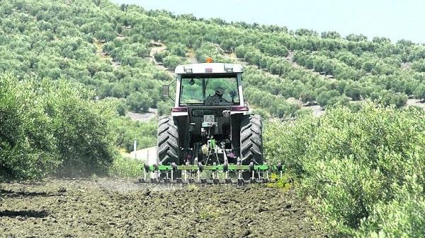 Laboreo del suelo en un olivar