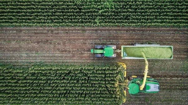 Maquinaria de John Deere picando maíz forrajero