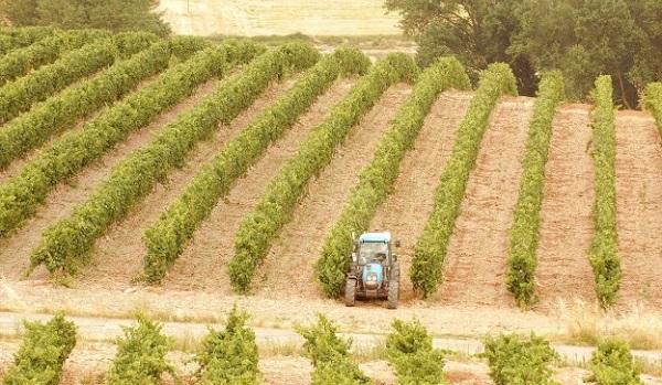 Tractor en plantación en espaldera