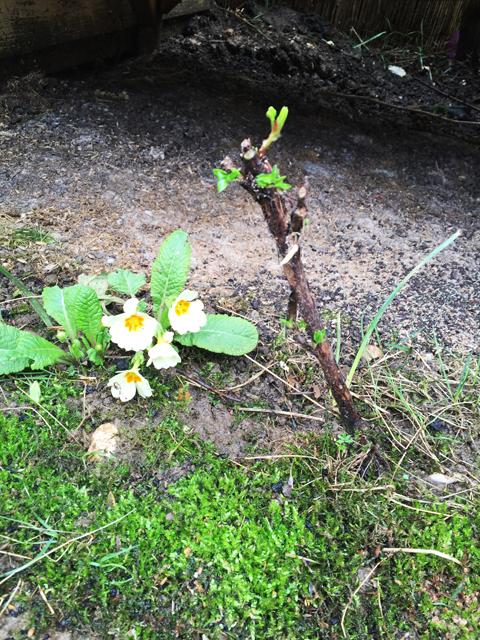 Moss Favours My Soil Over Grass