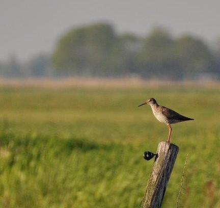 Vroege Vogels-column: Natuurnuchterheid