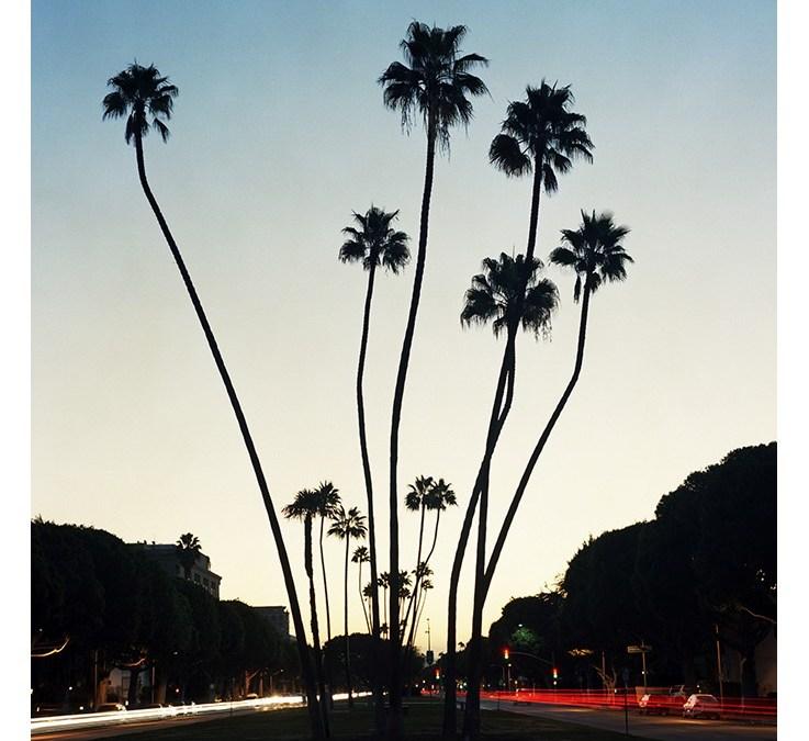 De stad in De Ochtend: Los Angeles verliest iconische palmbomen
