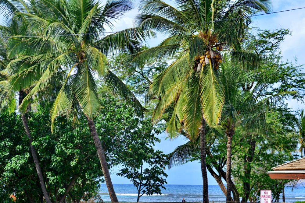 best rated kihei maui vacation rentals