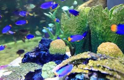 Dubai Mall aquarium to display tropical species