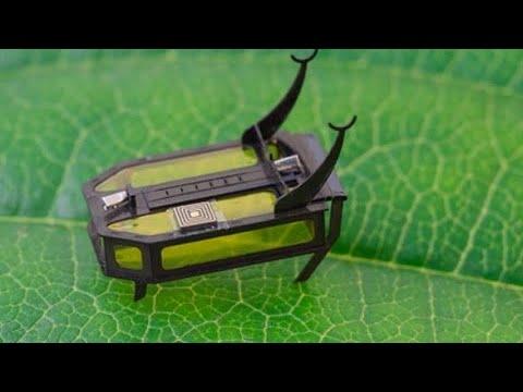 RoBeetle: menor robô do mundo é do tamanho de um grão de arroz