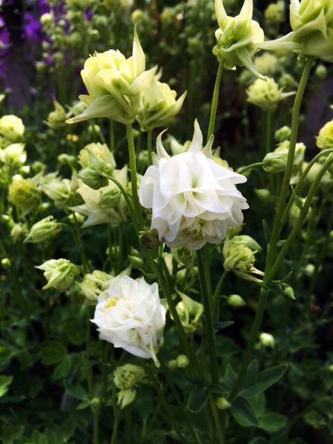Sortiment - växter