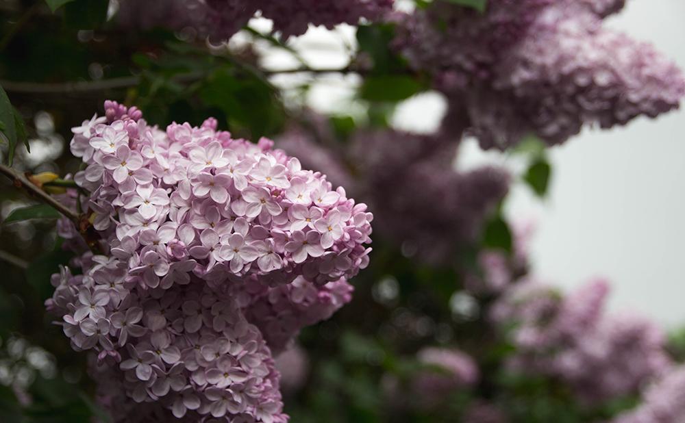 Växter - buskar