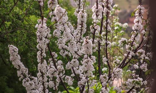 Superstiții de Florii și Paște