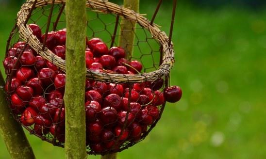 """Luna iunie conform tradiției populare româneștimai este denumită și """"Cireșar""""sau """"luna cireșelor"""", deoarece acum se coc cireșele."""