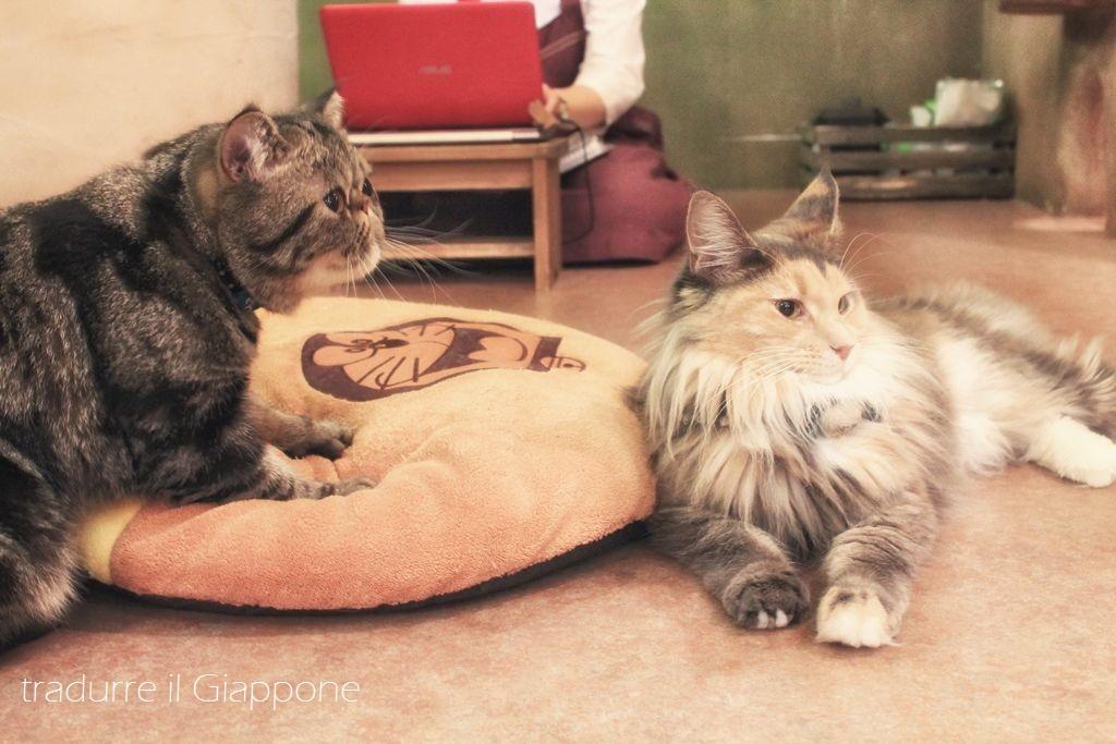 Gatti :D