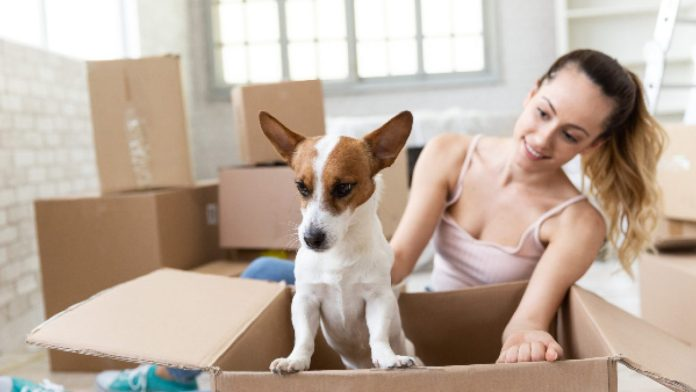 moving-boxes-girl-and-dog-1280x720