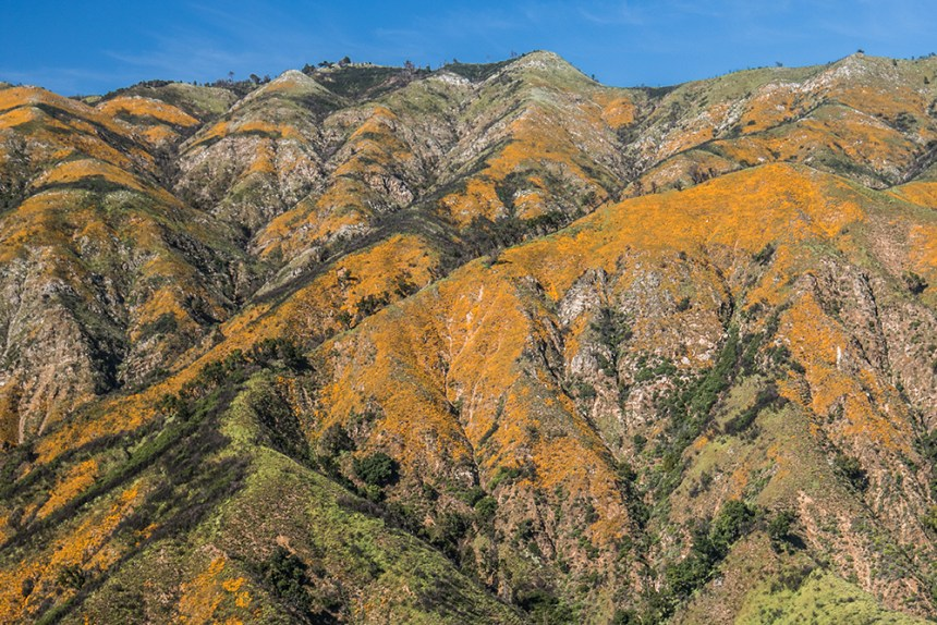 Poppy's on Hill after Big Sur Fire (2016-2017)