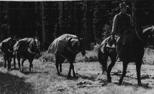 Pack Train Near Olallie - 1930s