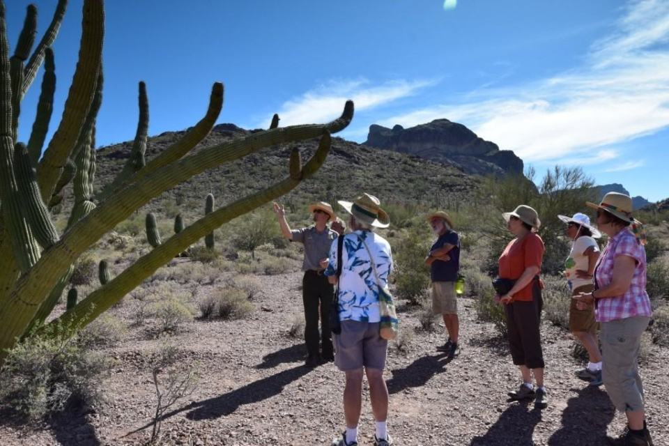 Ranger Dan introducing the Organ Pipe Cactus