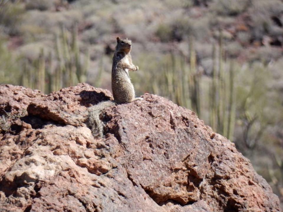 Ground squirrel strikes a pose!