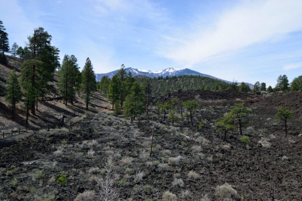 Bonito Lava Flow and San Francisco Peaks