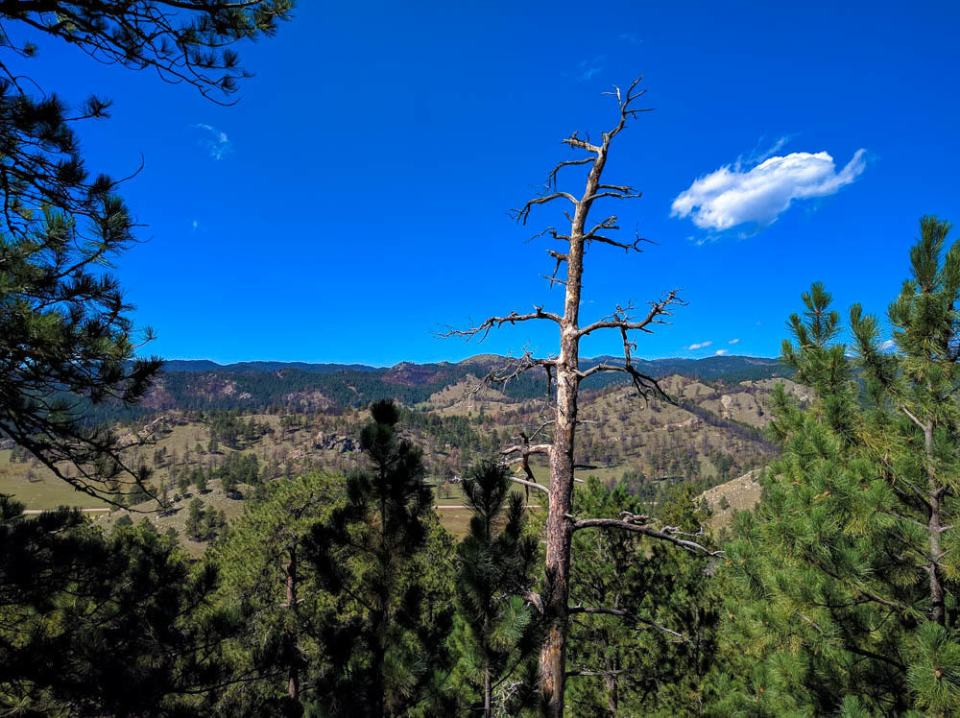 Rankin Ridge - View of Southern Black Hills