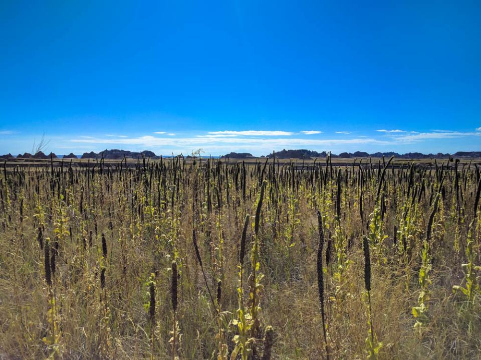 Medicine Root Trail Mix Prairie Plants