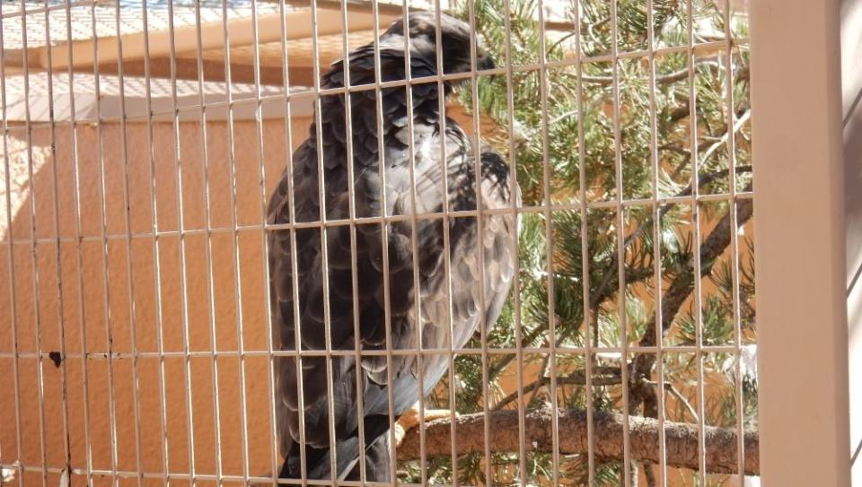 This eagle is a wonderful bird to see, but this enclosure feels too small and sad for this fantastic wild animal.