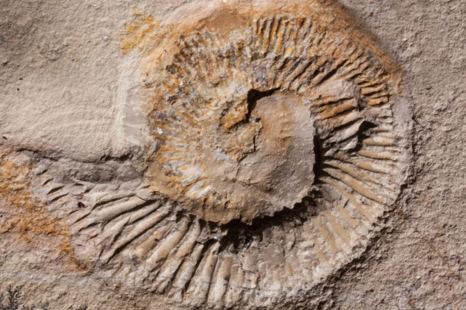 Fossils from the Permian Age