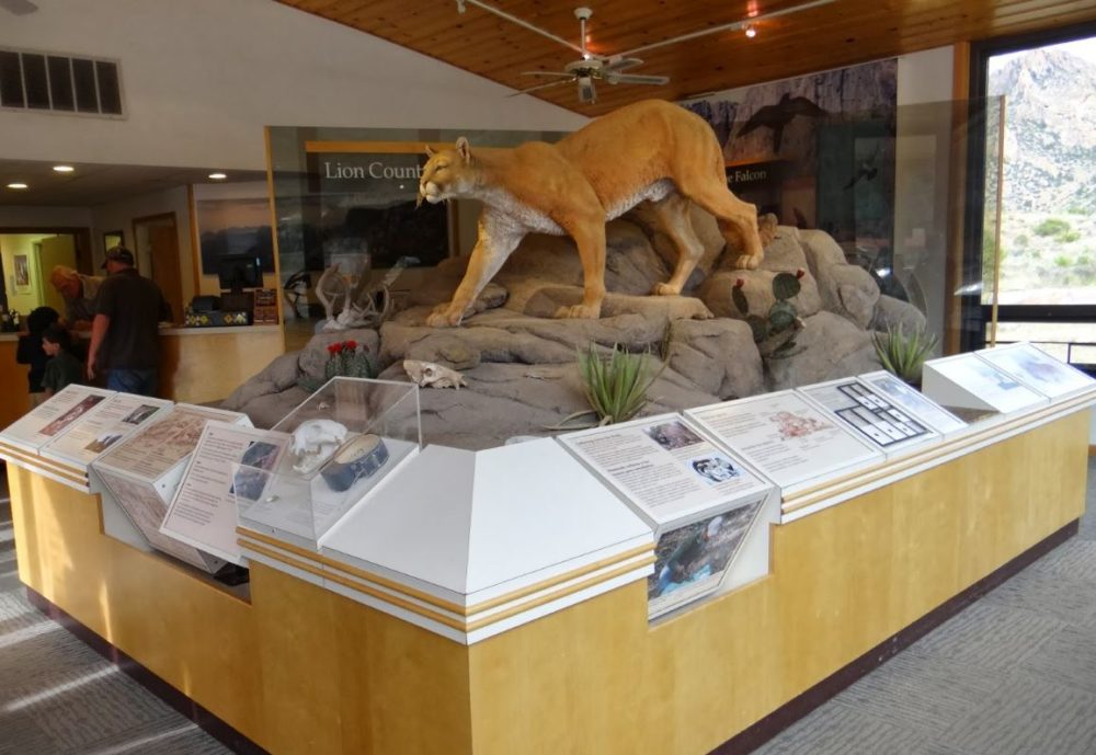 Chisos Visitor Center - Take a moment to learn some bear and mountain lion safety