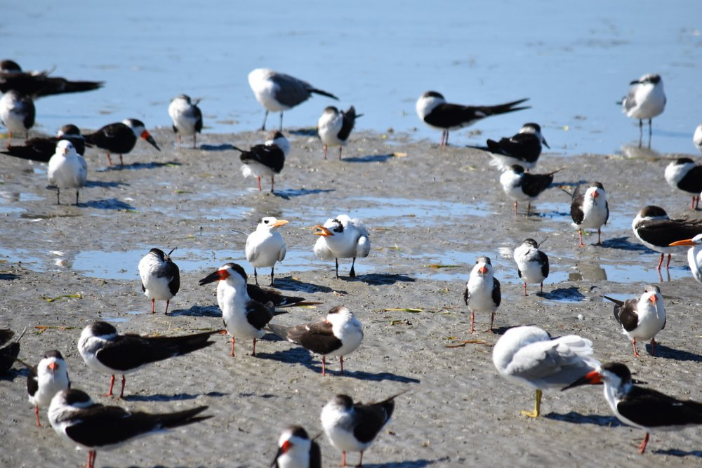 So many shorebirds!