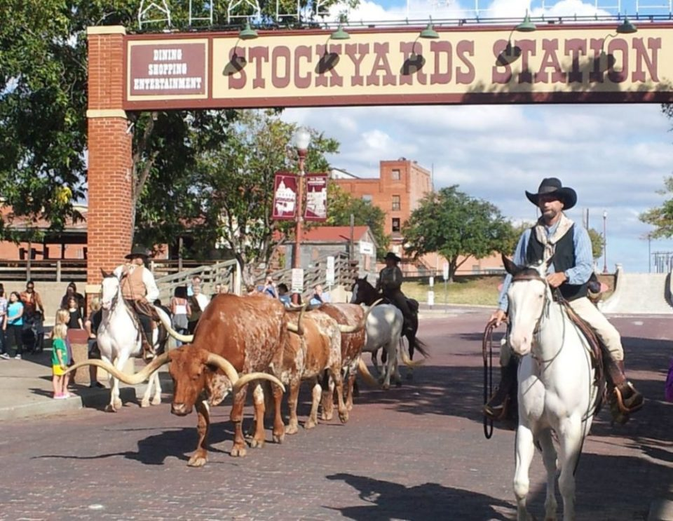 Longhorns at the Stockyard in Fort Worth
