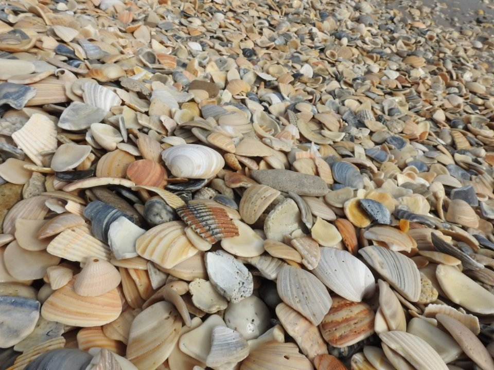 Shells from Small Shell Beach